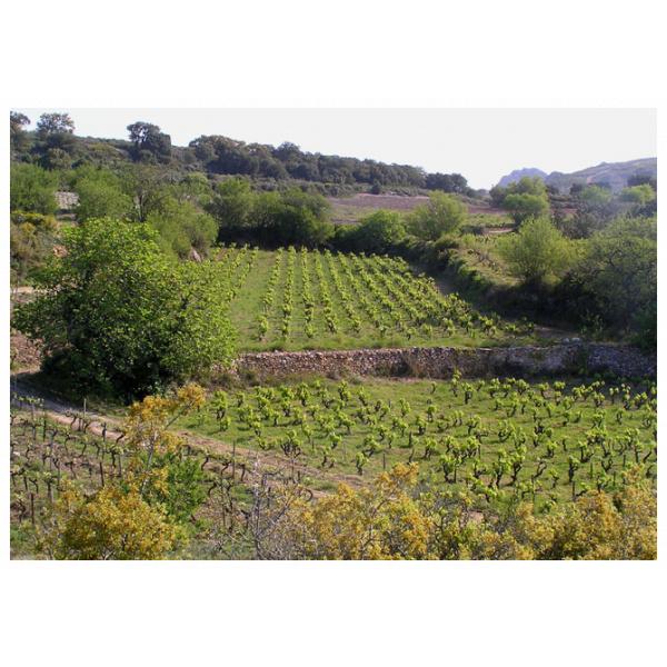 Vieilles vignes rouge domaine gauby